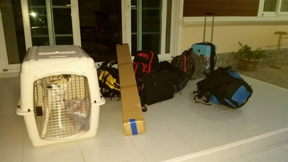 Homeward Bound! How to Get a Dog From Thailand to the UK