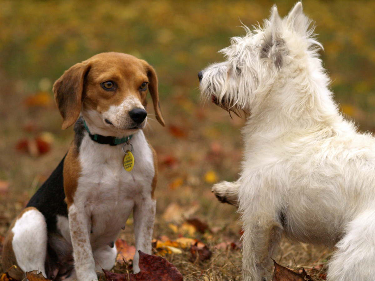 Why Socializing With Other Dogs Is More Important Than You Think