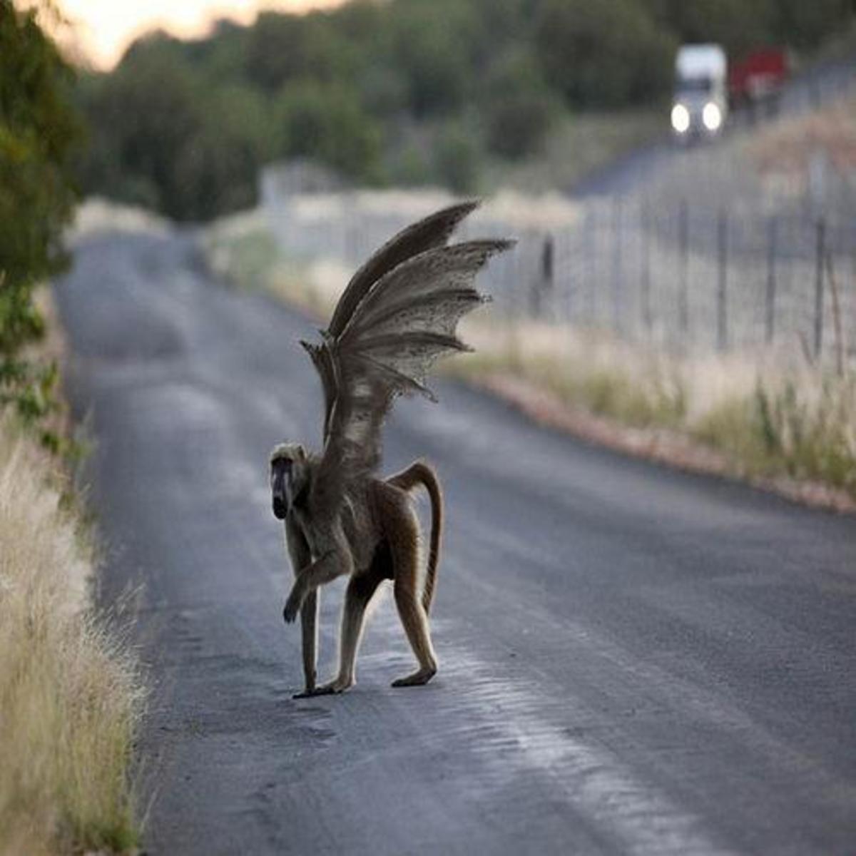 Rebobs: The Flying Monkeys of Napa Valley