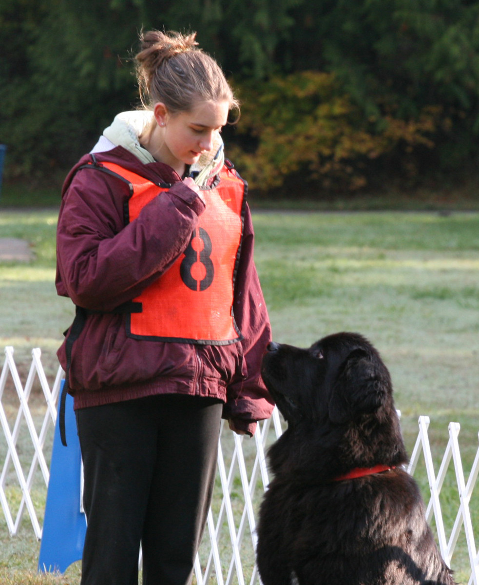 Teaching Attention for You and Your Pup