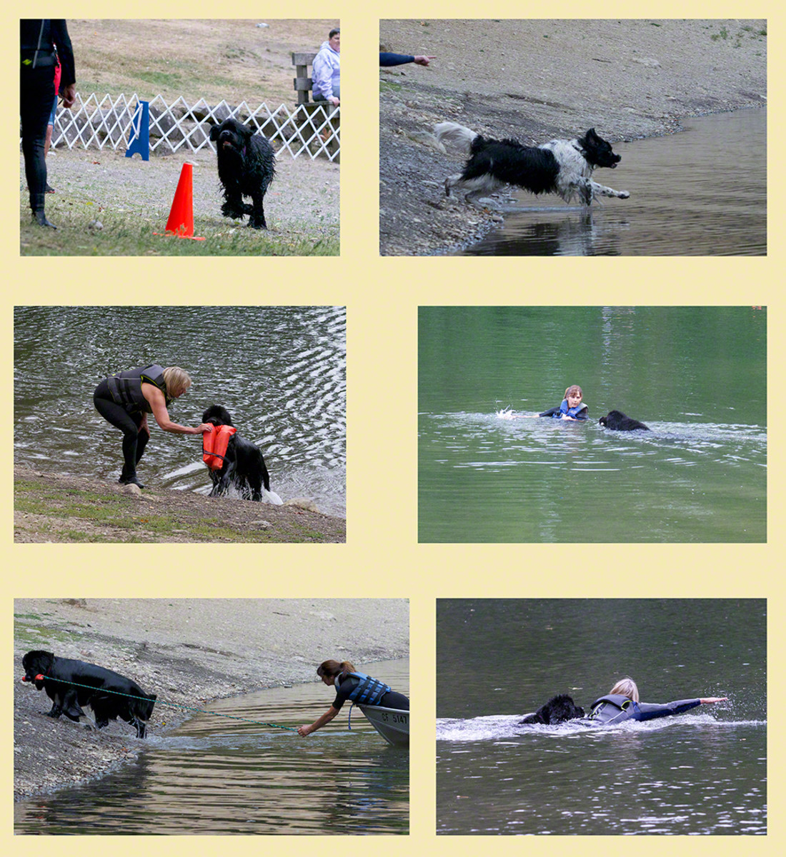 Examples of NCA Junior Water Dog exercises