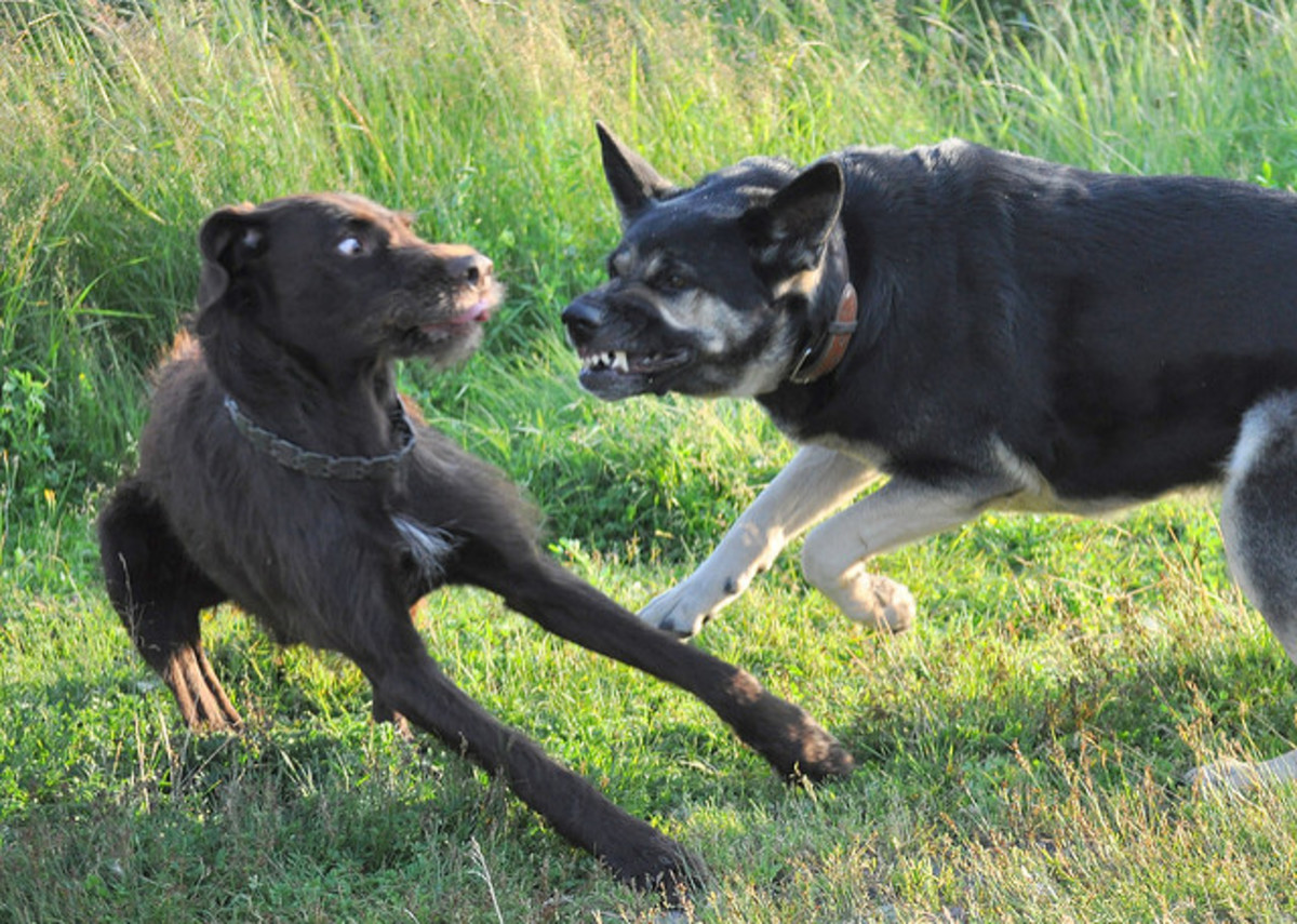 How to Protect Your Dog From Being Attacked: 4 Strategies
