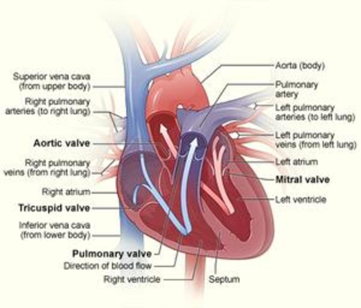a-natural-approach-to-atrial-fibulation