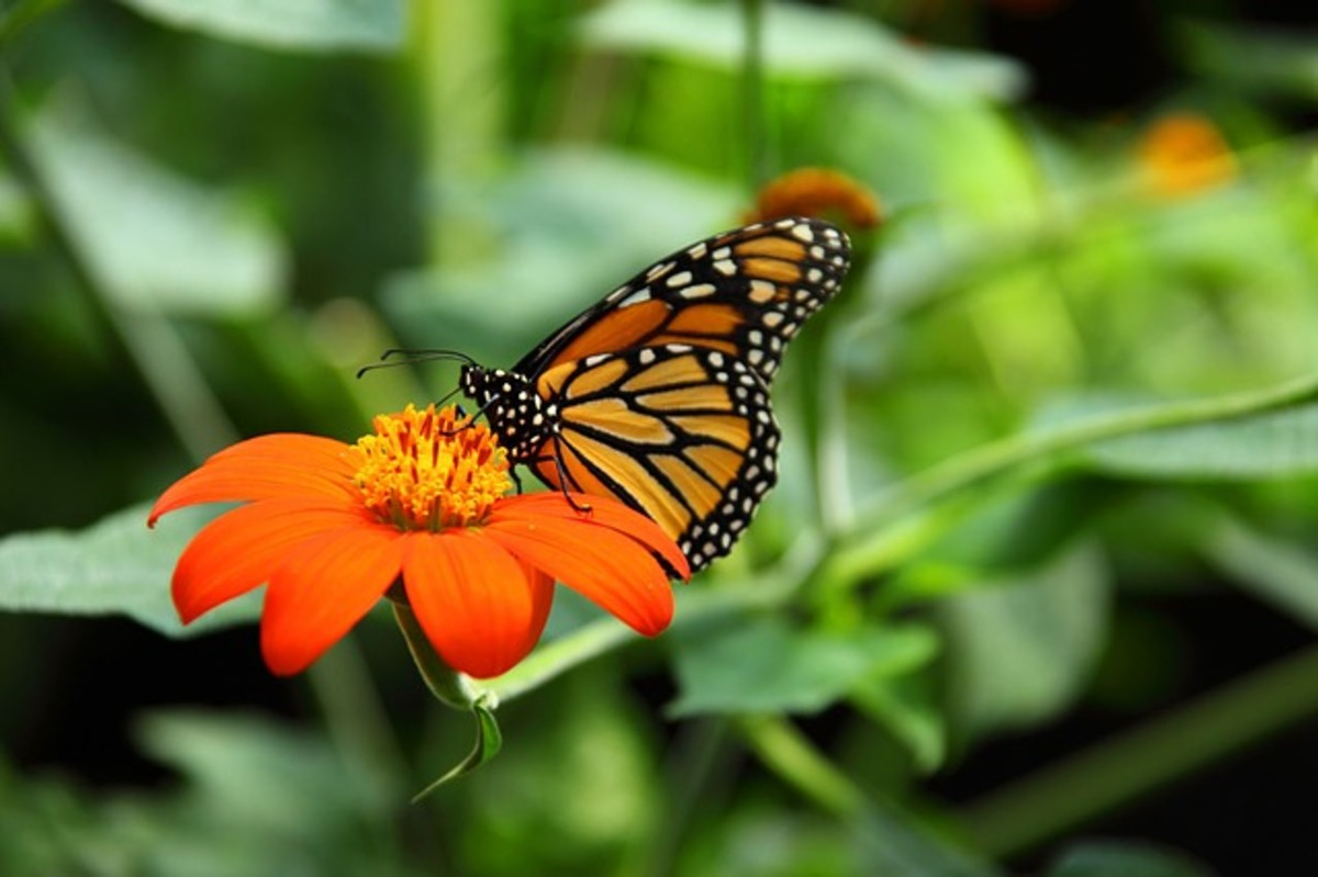 Butterflies are a beautiful symbol of transformation.