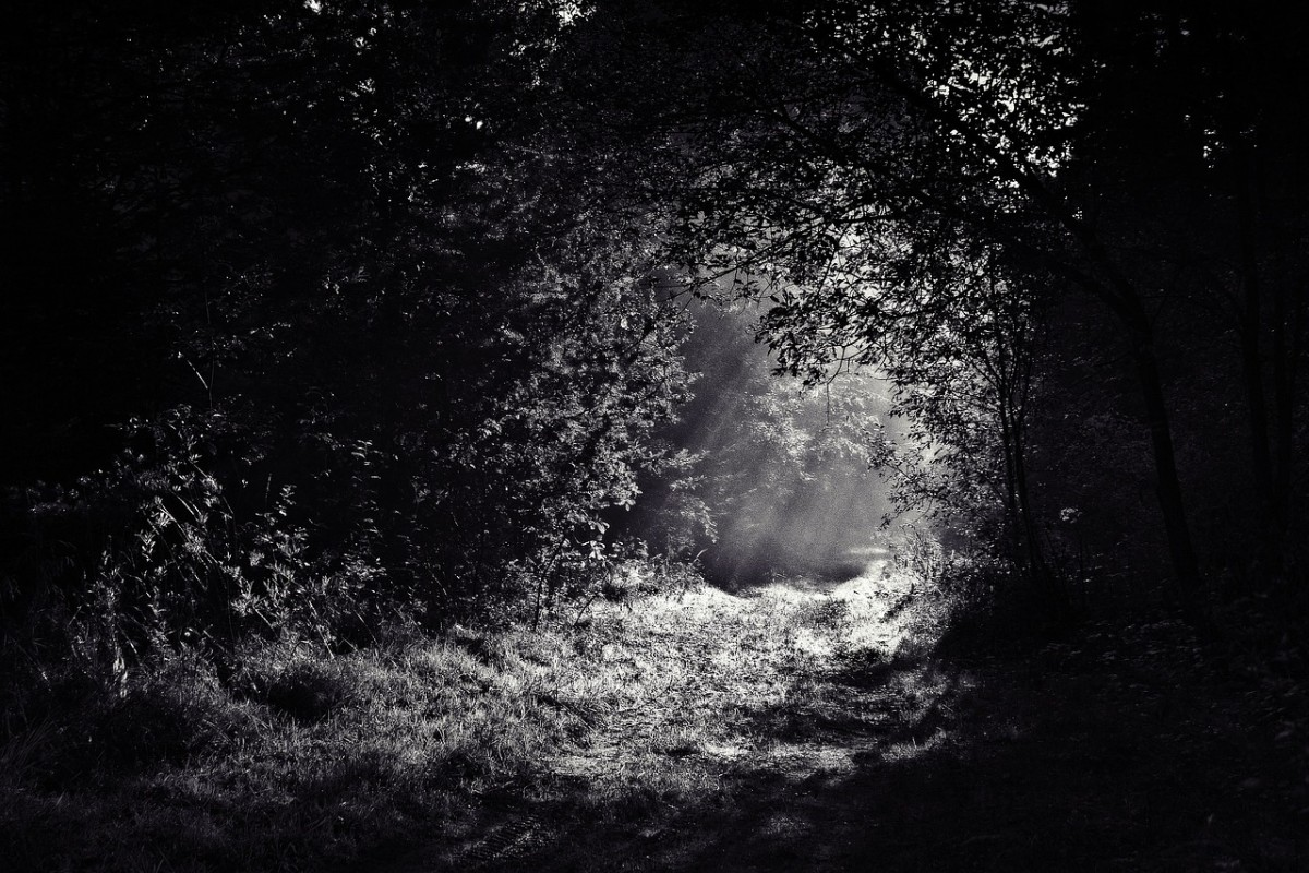 a-night-in-the-forest-part-two