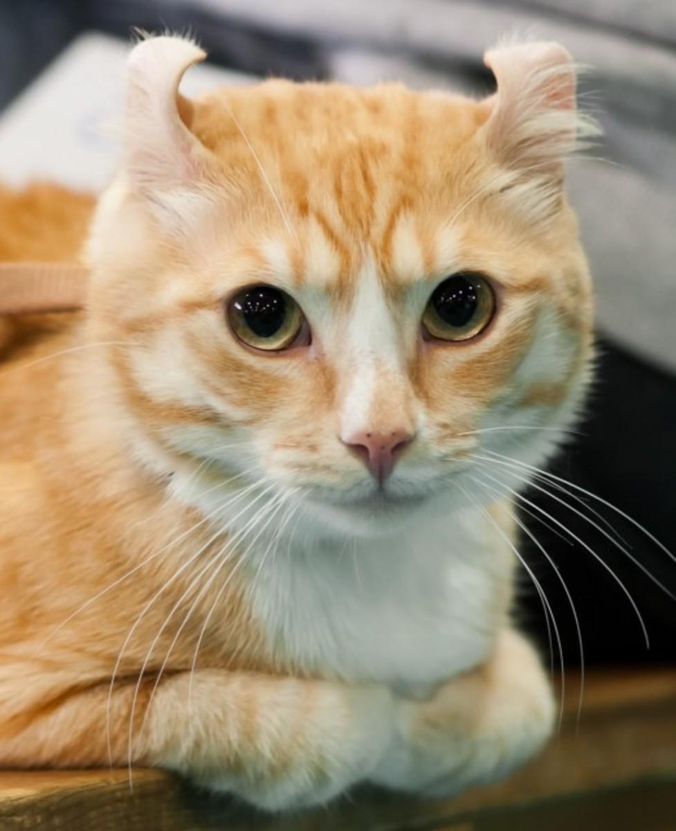 Five Kooky Cat Breeds