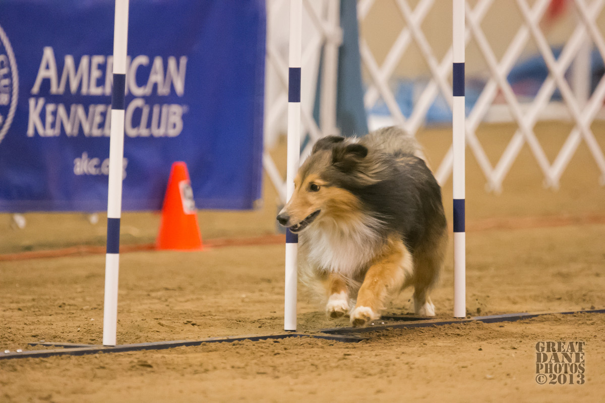Why Winning Isn't Even Close to Everything in Canine Sports