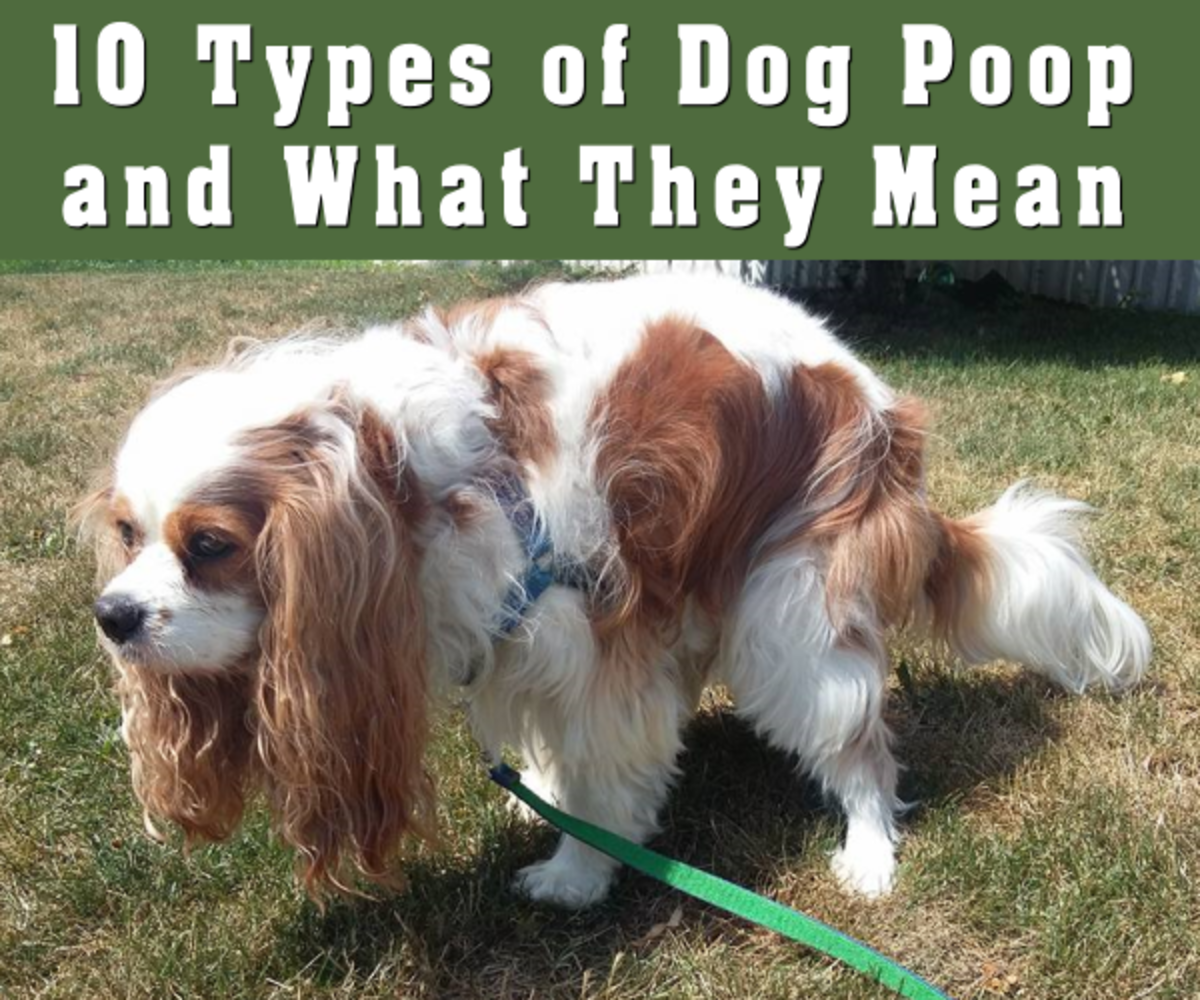 10 Types of Dog Poop and What They Mean