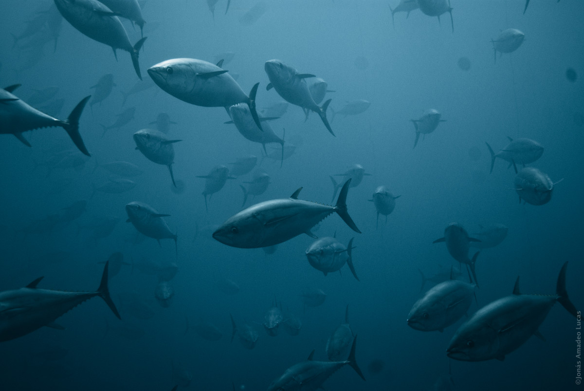 Sustainable Seafood: Why Tilapia Is the Fish of the Future