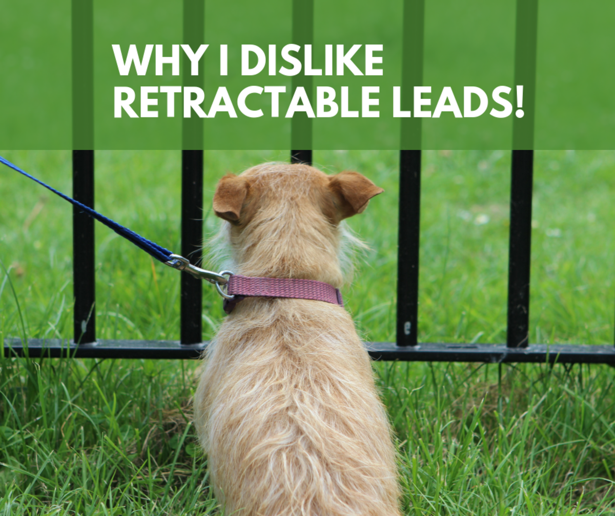Why I'm Against Retractable Leads!