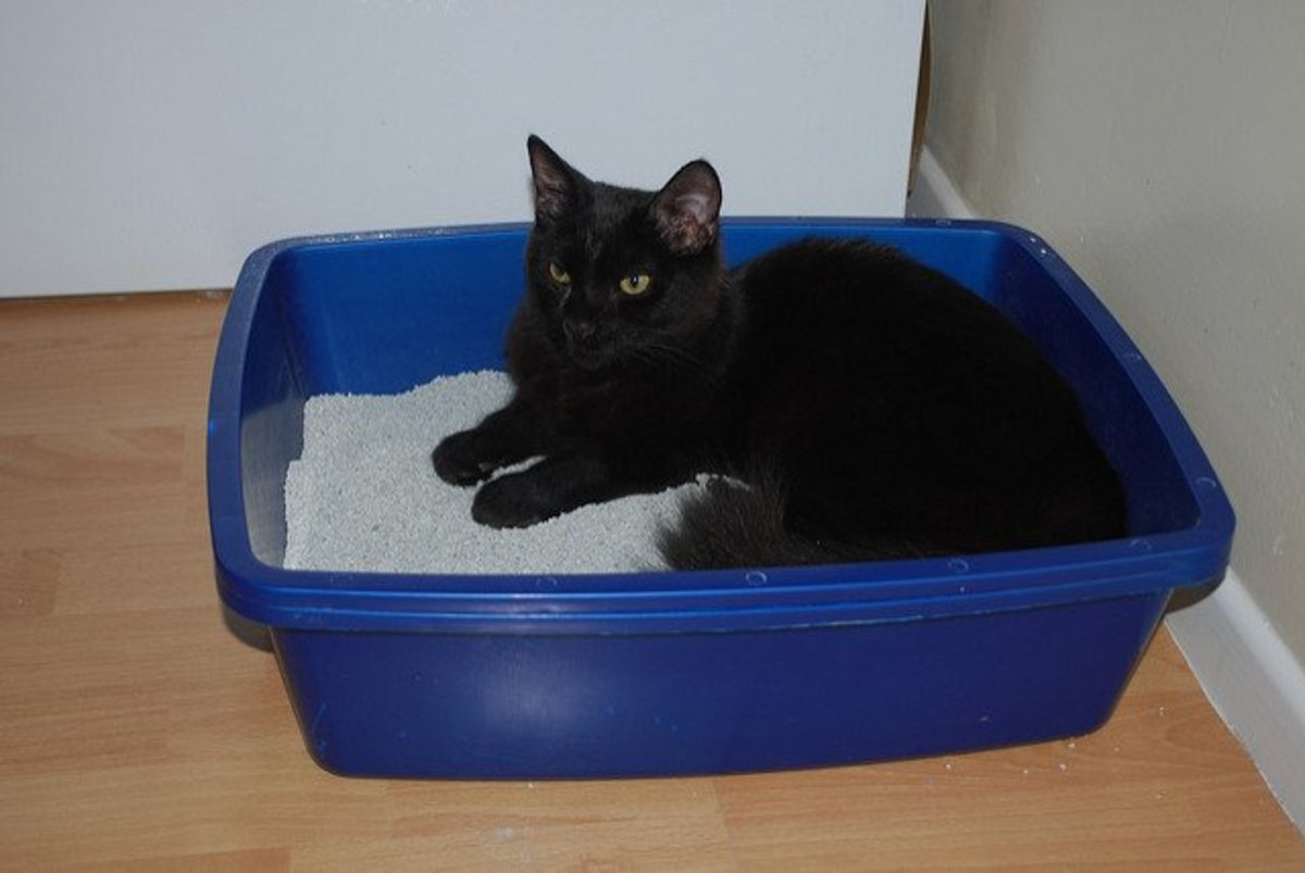 Most cats don't use their litter boxes as napping spots, though some nervous kitties find security in the tight quarters