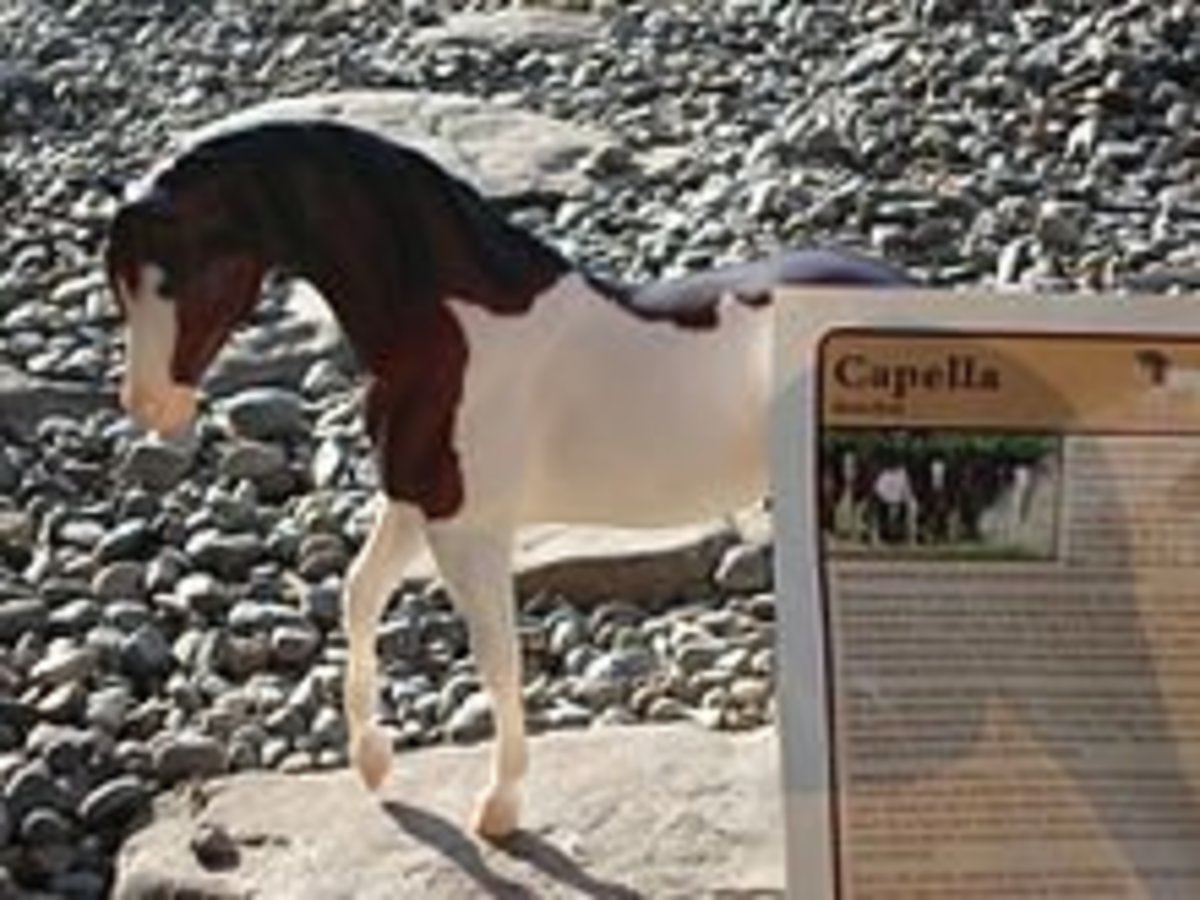 Can Extinct Horse Breeds Be Brought Back to Life?