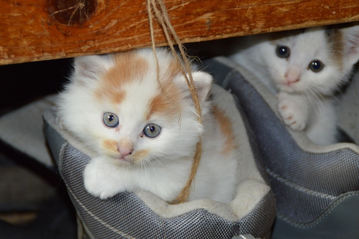 Kittens in Your Boots