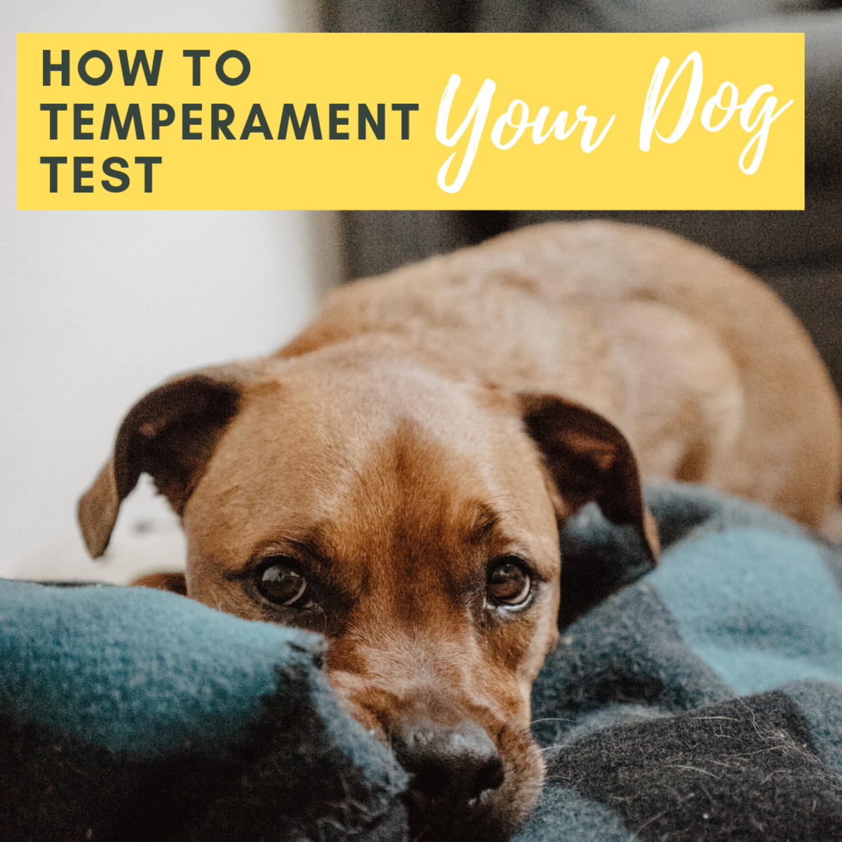 Temperament Testing in Dogs