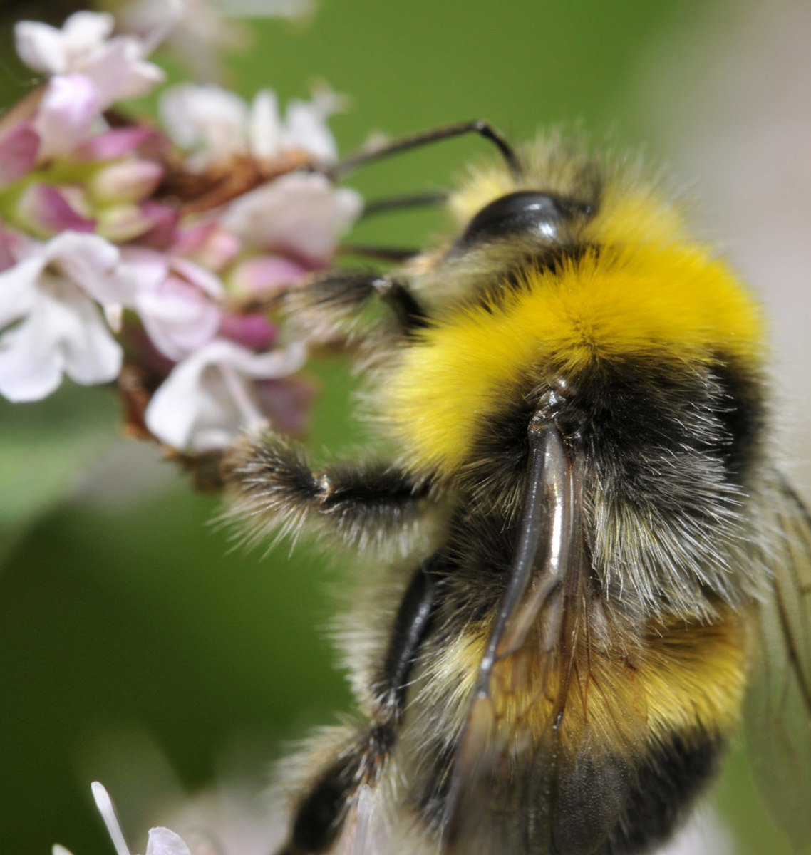 """Rhymes With """"E"""": Bee Symphony"""
