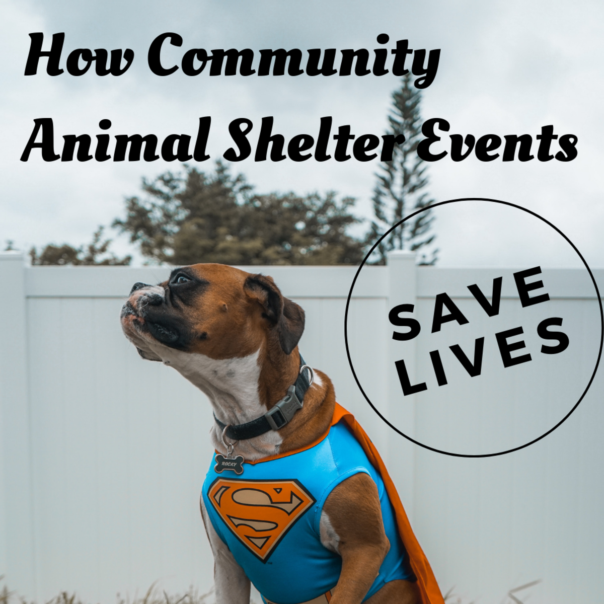 Shelter Events Help to Save Lives
