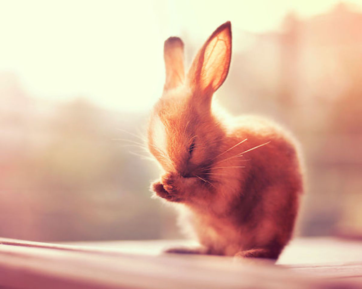 Regular exercise benefits digestion, sleep, and general energy levels in rabbits.