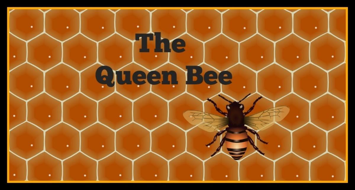 The Life Of Queen Bee In Honey Hive