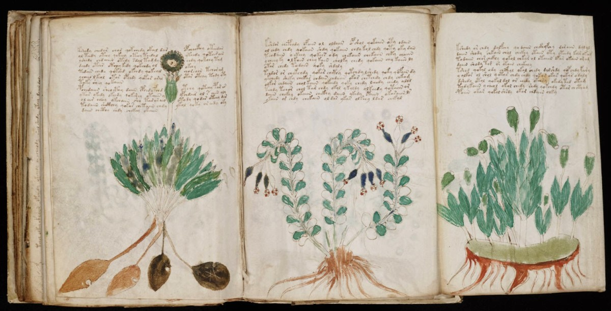 Voynich Manuscript on page 170