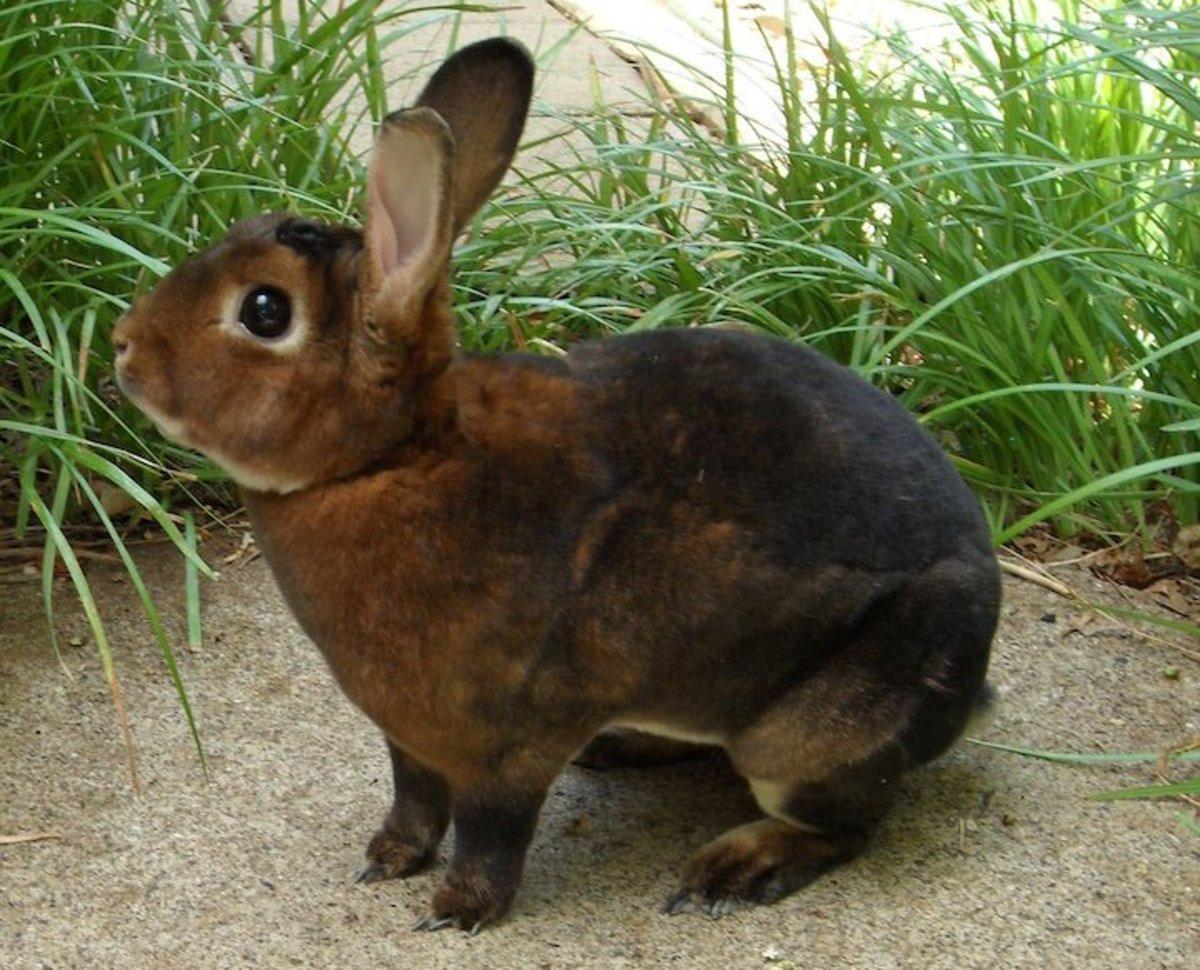 15 Of The Best Pet Rabbit Breeds Pethelpful