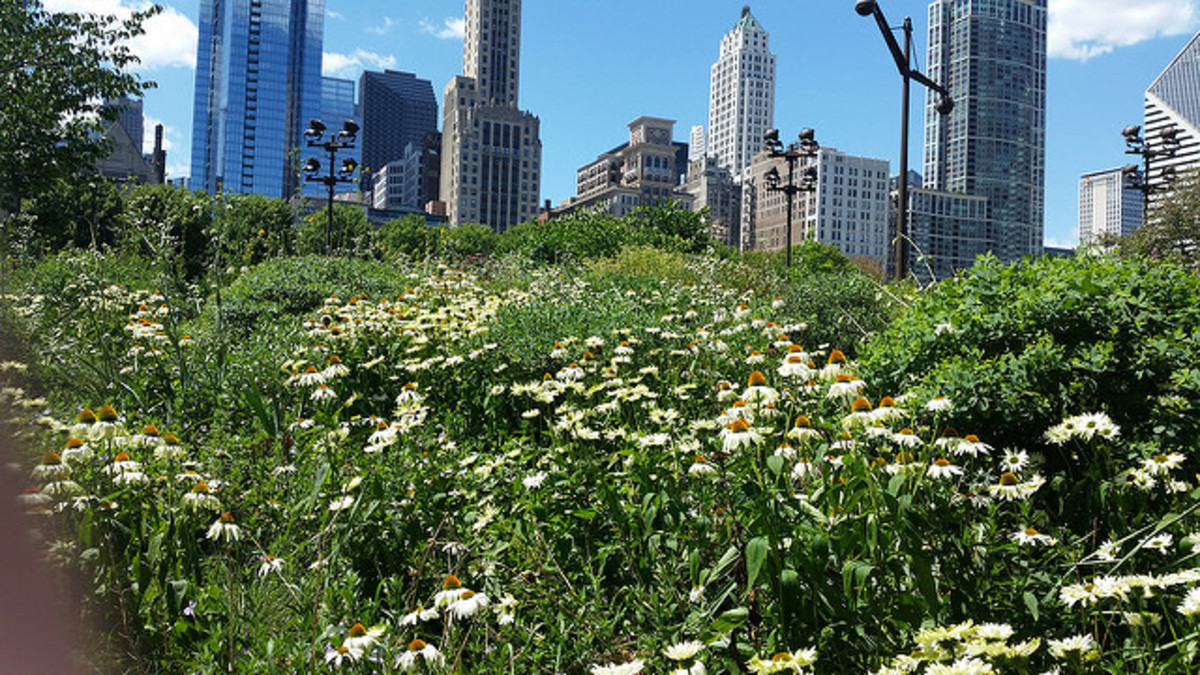 Lurie Garden in summer with skyscrapers in the background