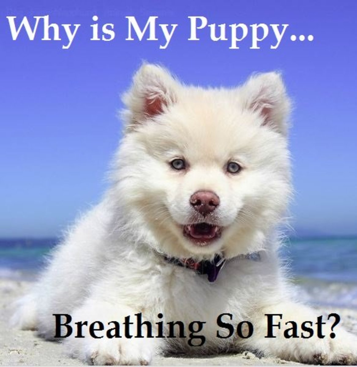 Puppies may breath a bit faster than adult dogs.