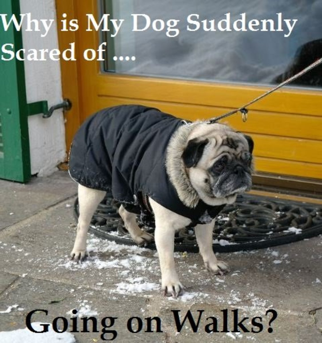 Many dog owners report their dogs are scared of going outside.