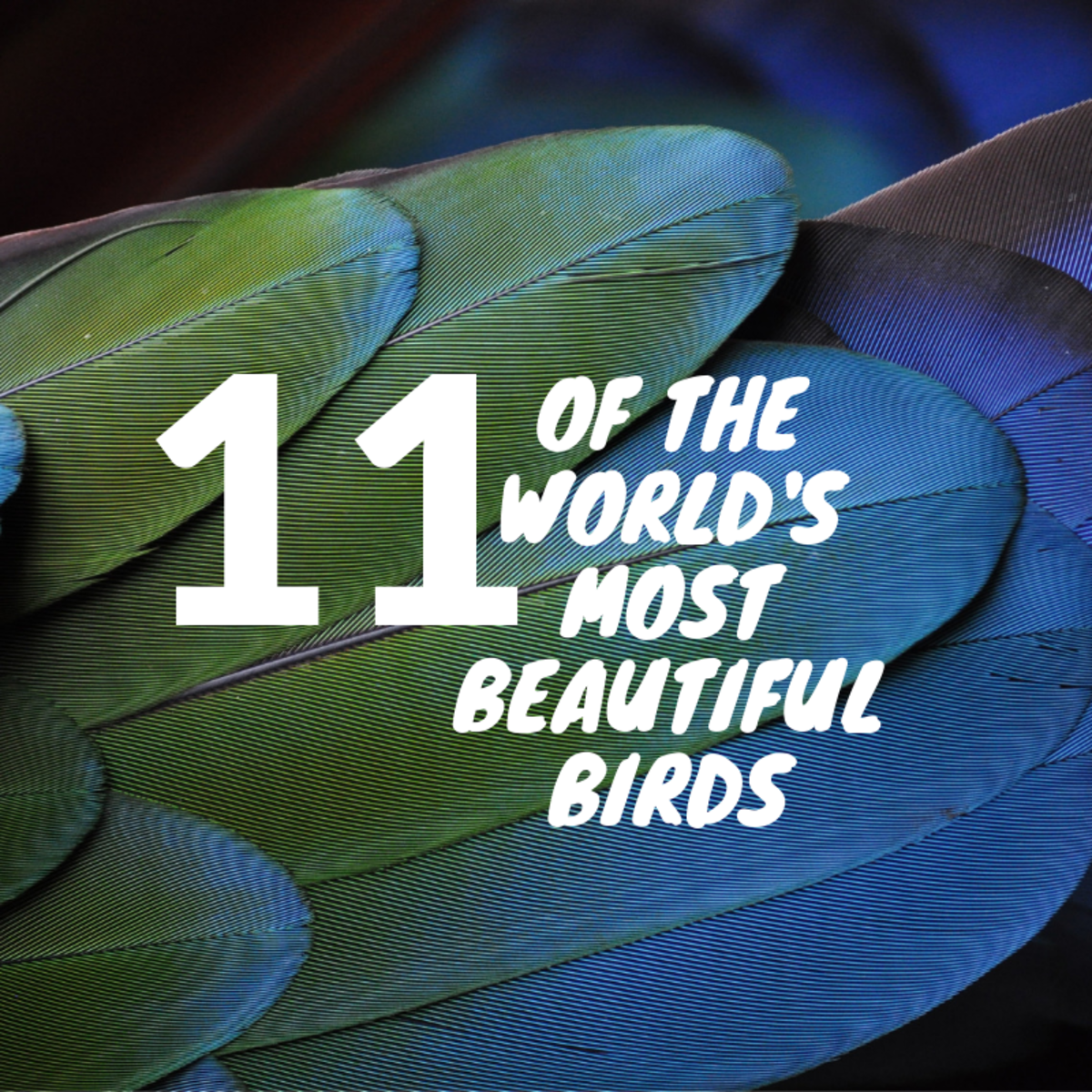 These 11 birds are some of the most visually spectacular in the world.
