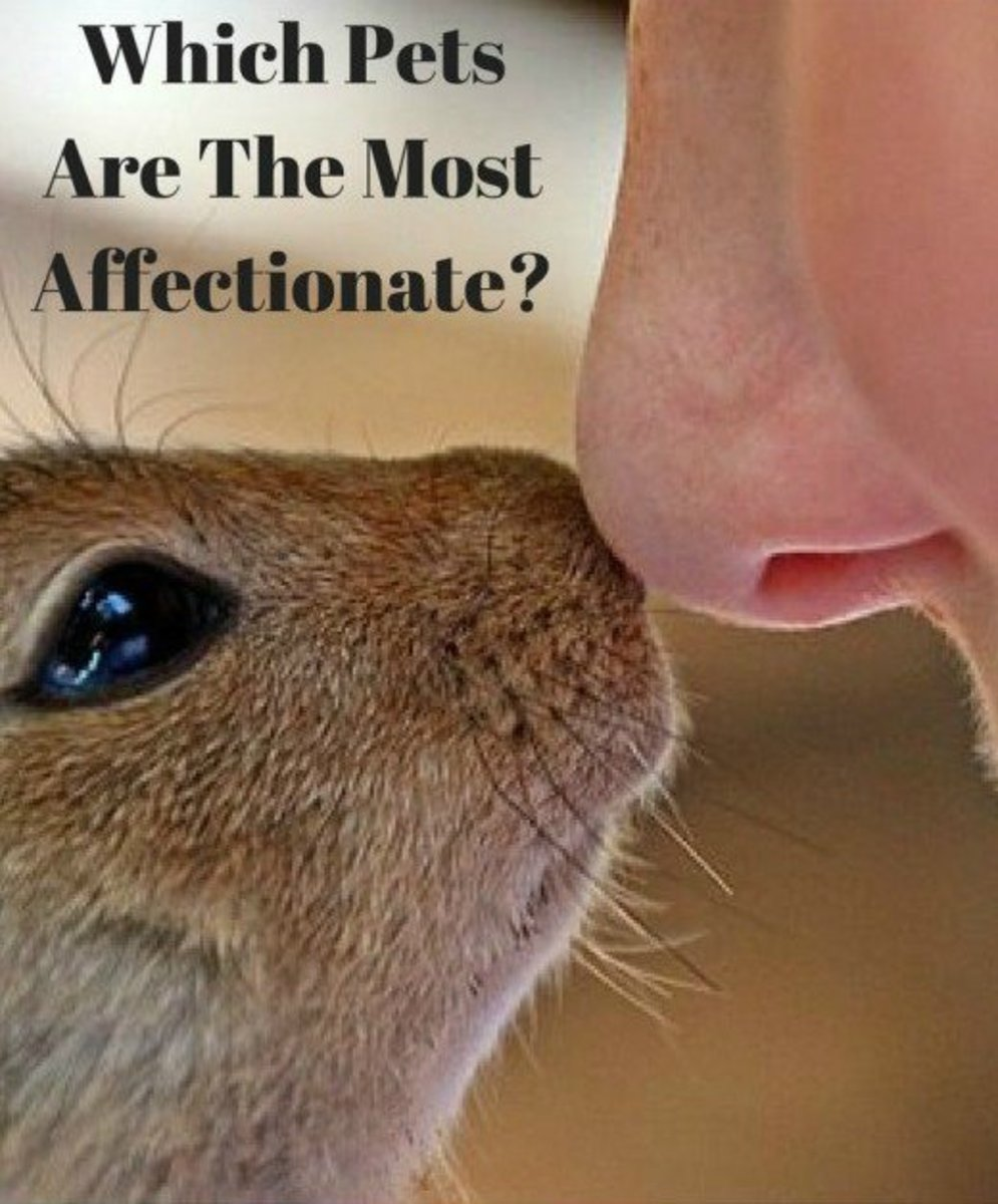 Which pets are the most affectionate?