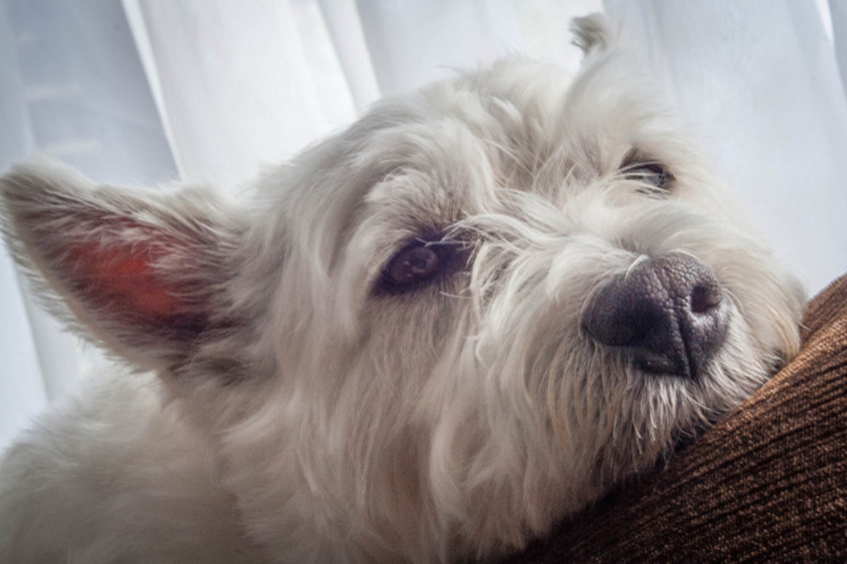 Many dogs sleep for most of the day when left alone; other dogs become sad.
