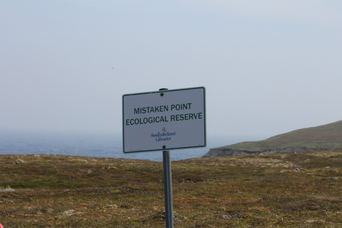 Visiting Mistaken Point Ecological Reserve, and Some of the Oldest Creatures on Earth