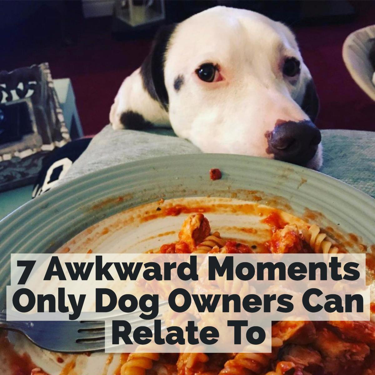 With a dog, every meal is a guilt trip.