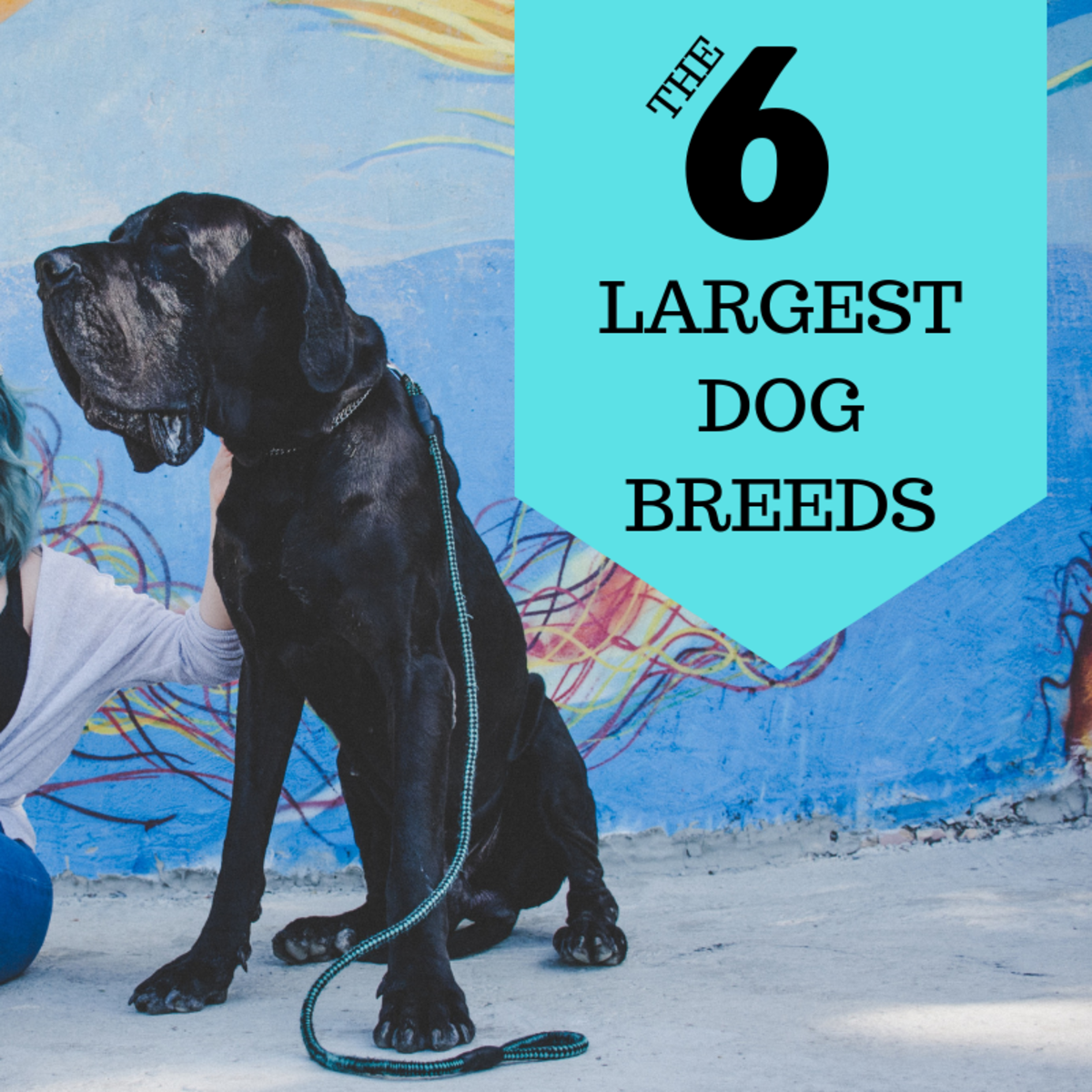 Dogs come in all shapes and sizes, but which breeds are the biggest?