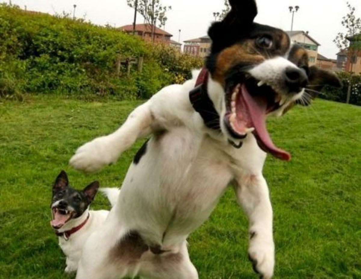This picture brings me joy. A dog's happiness is infectious.