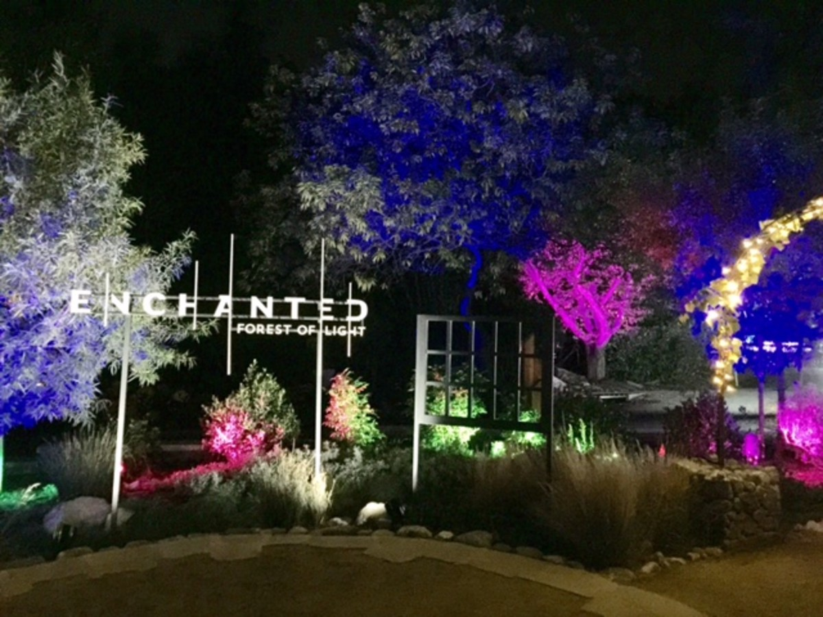 Welcome to the enchanted forest of light.