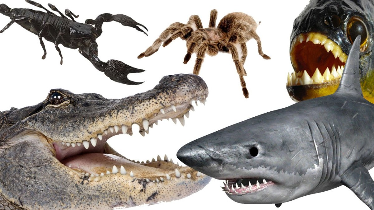 10 deadliest animals on the planet owlcation