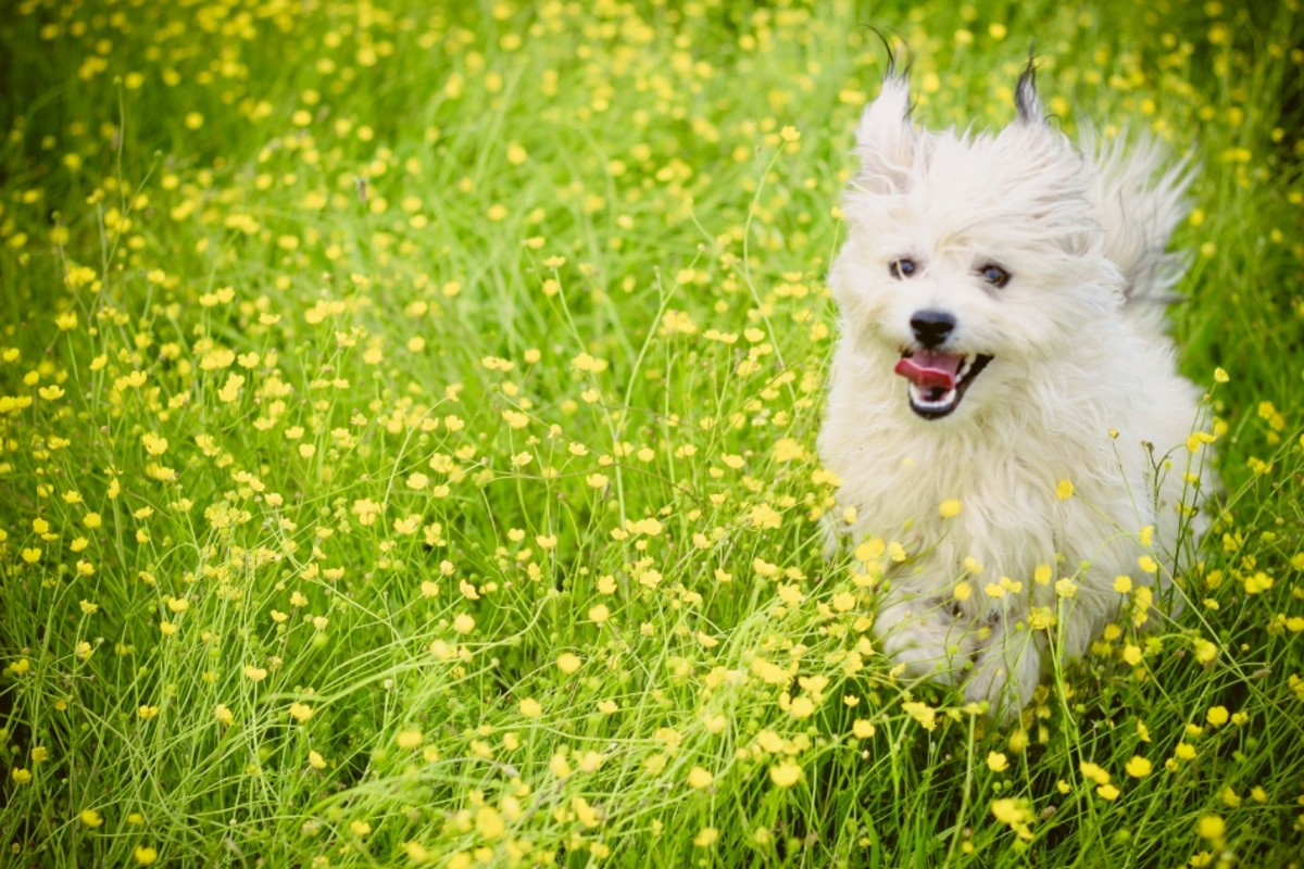 Isn't it important to choose a high-quality and healthy food for your dog?