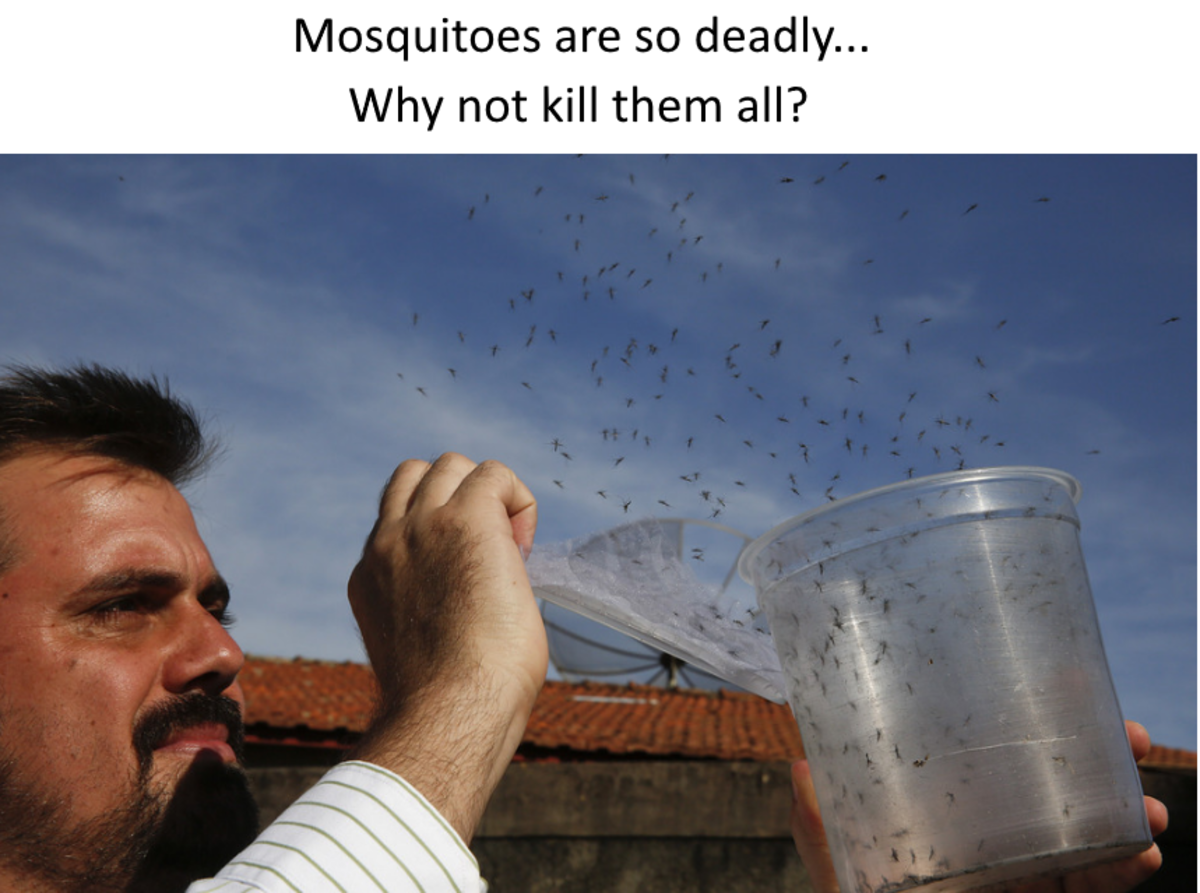 The death toll from diseases carried by mosquitoes is so huge that scientists are working on a radical idea. Why not eradicate them? Mosquitoes kill more humans than any other animal and were linked to roughly 500,000 deaths in 2015.