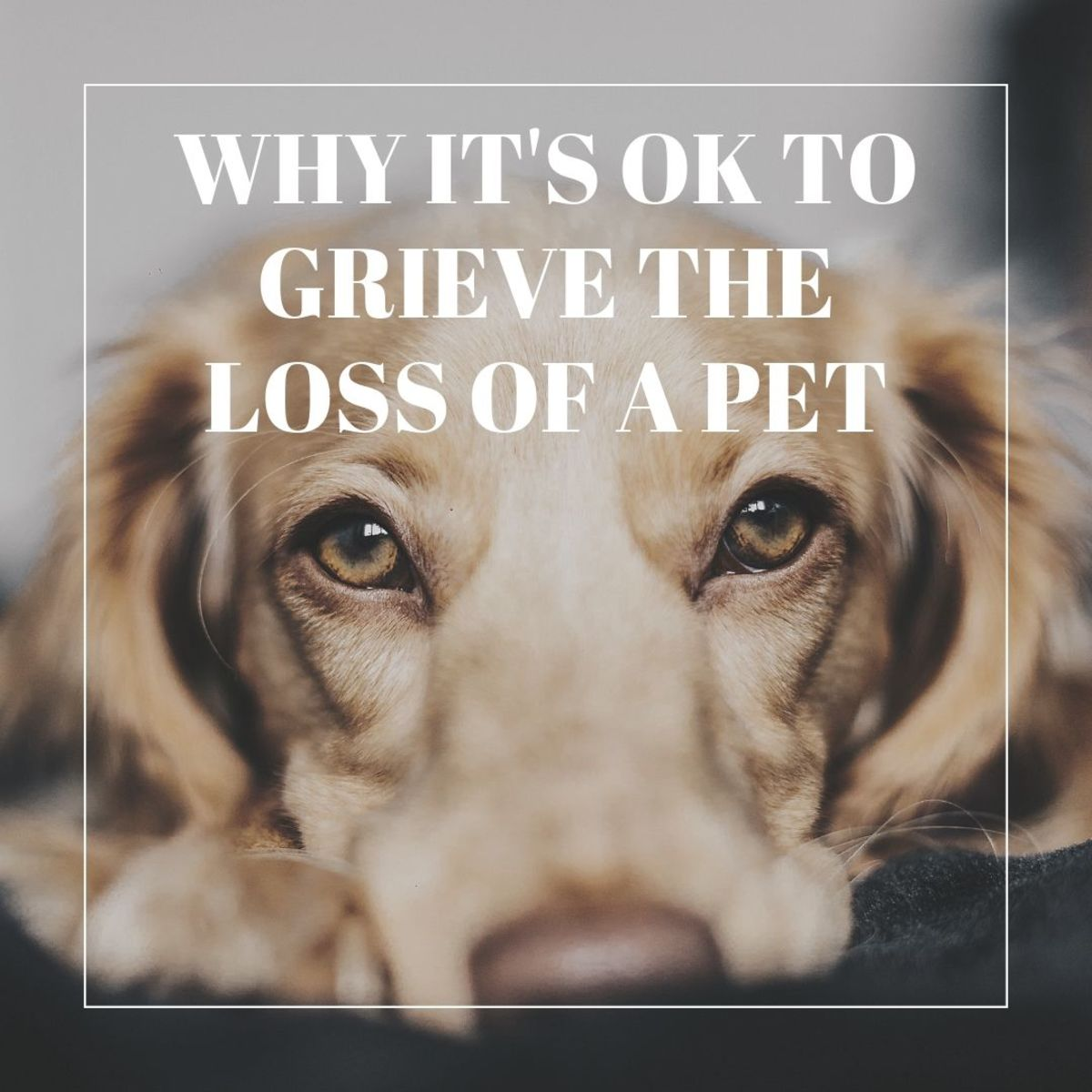 Why It's OK to Grieve a Pet... Even When You Have Lost Family Members