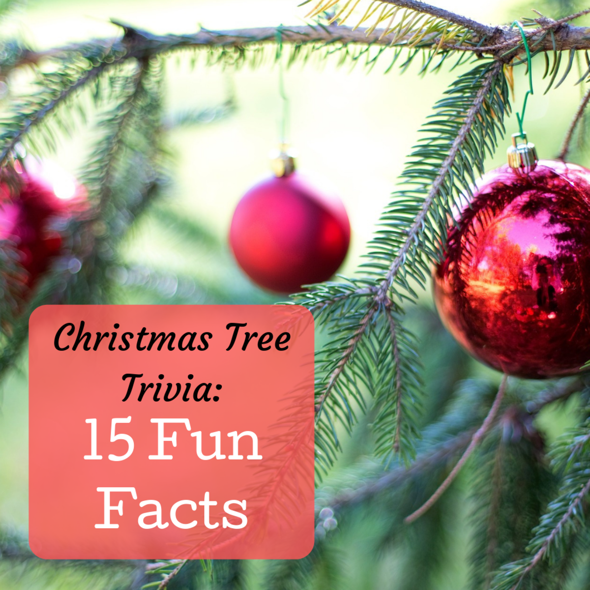 15 Trivia Facts About Christmas Trees