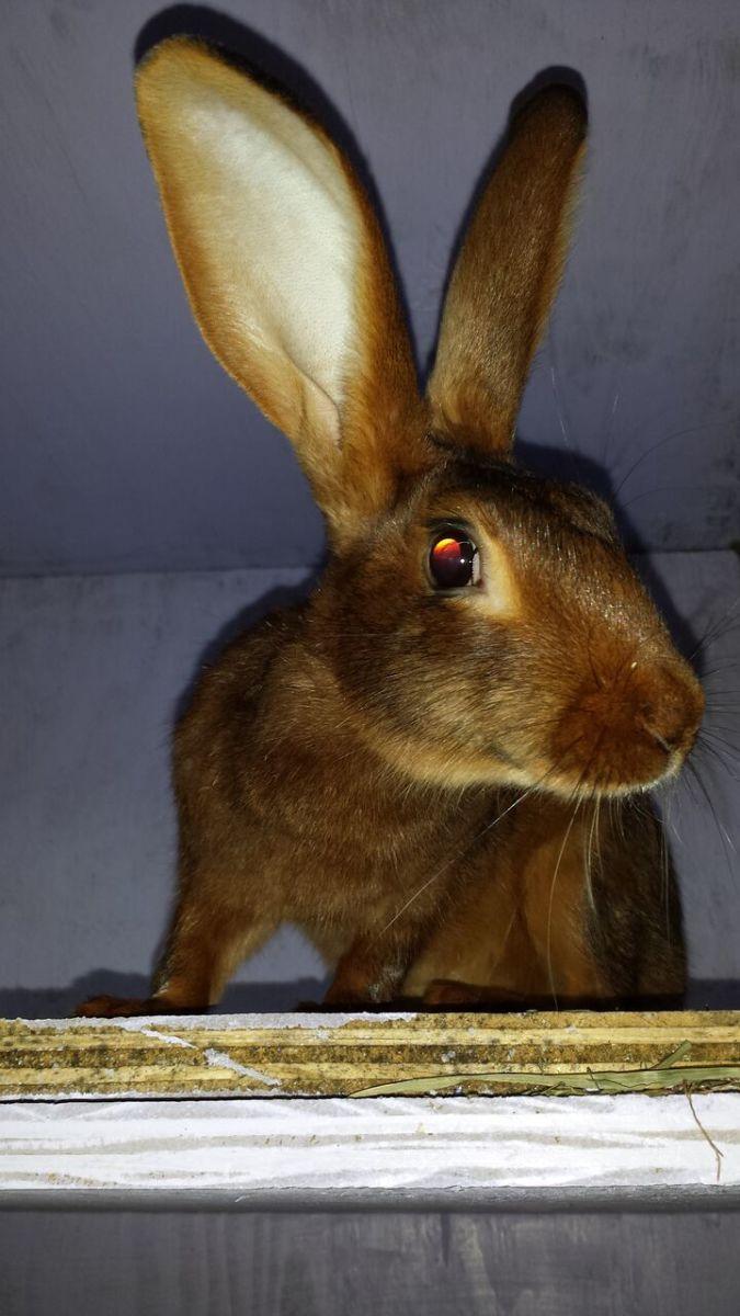 Rabbits | PetHelpful