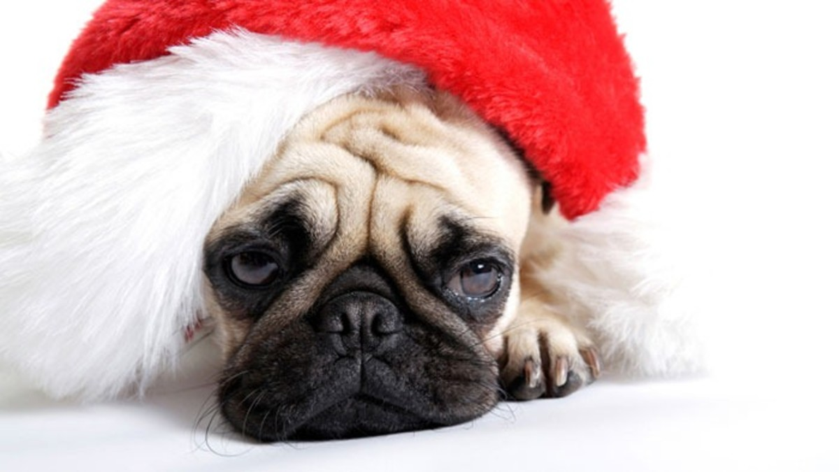 When Christmas Is Over... Post-Holiday Depression | HealDove