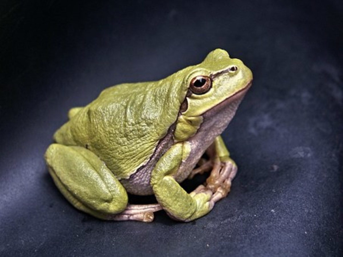 Secret Revealed: What Frogs Talk About When We Aren't Looking