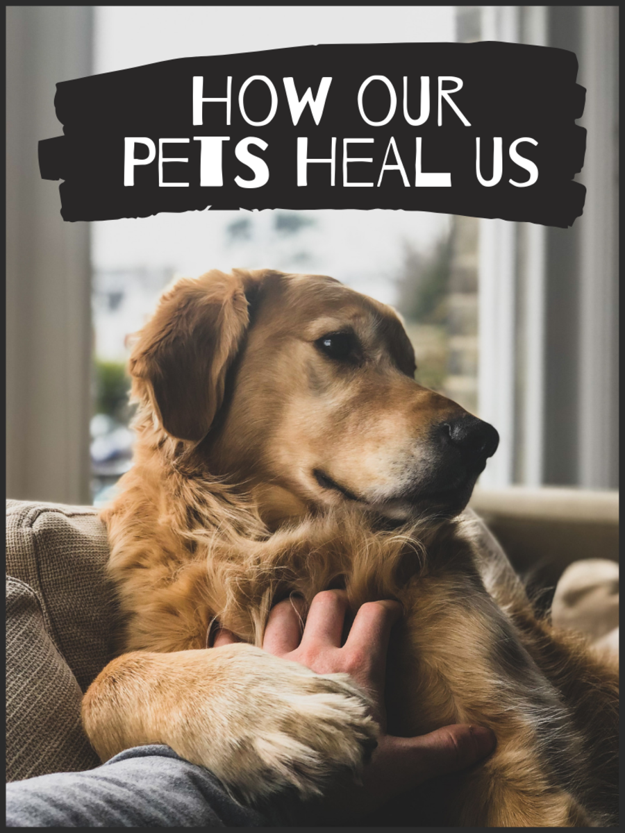 The Healing Power of the Dog