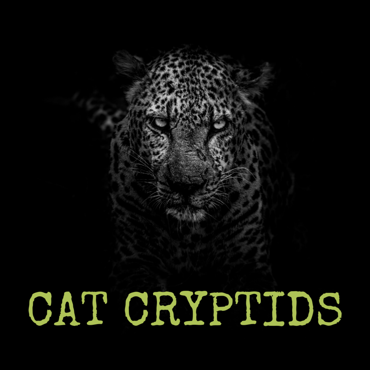 Learn about three legendary cats: the White Death, the Wampus Beast, and the Cactus Cat.