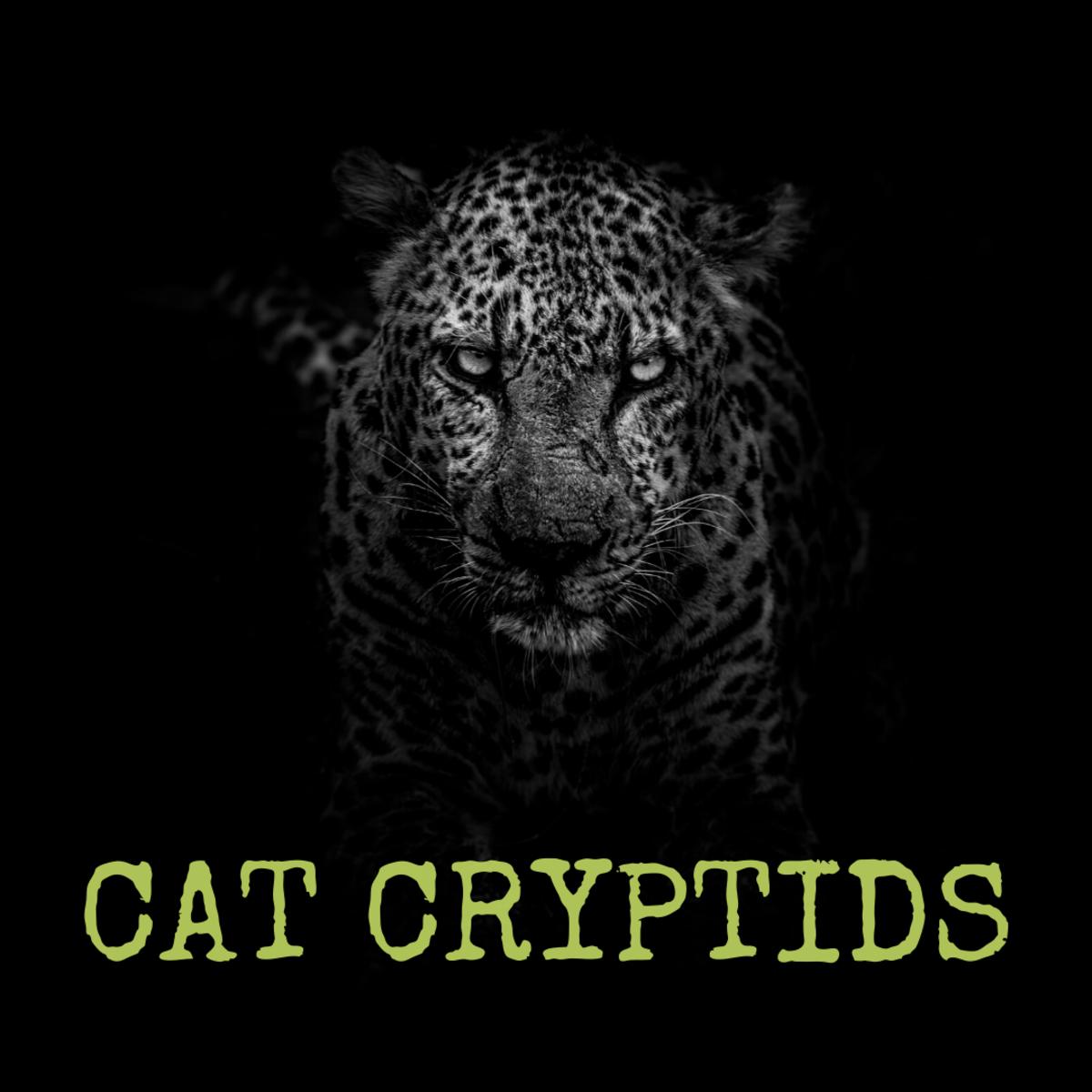 Three Cat Cryptids: White Death, Wampus Beast, and Cactus Cat