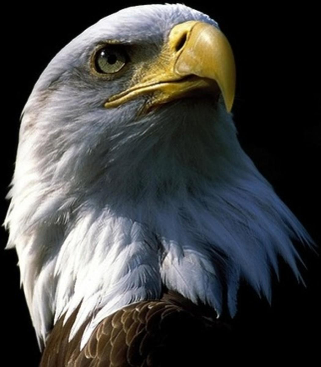 Patriotic Salute