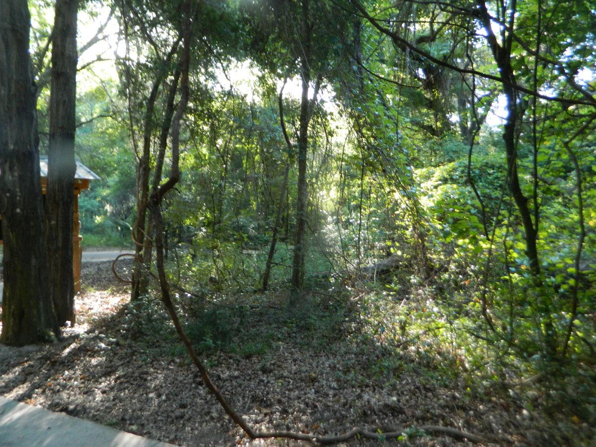 a-walk-on-paynes-prairiepictorial-journaling