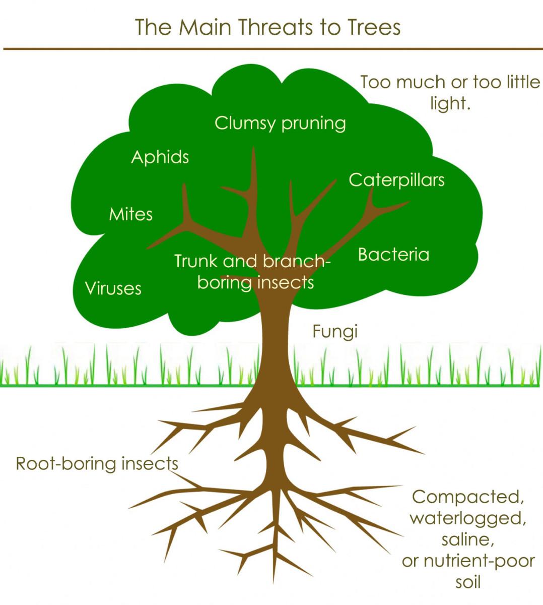 Things that make a tree sick