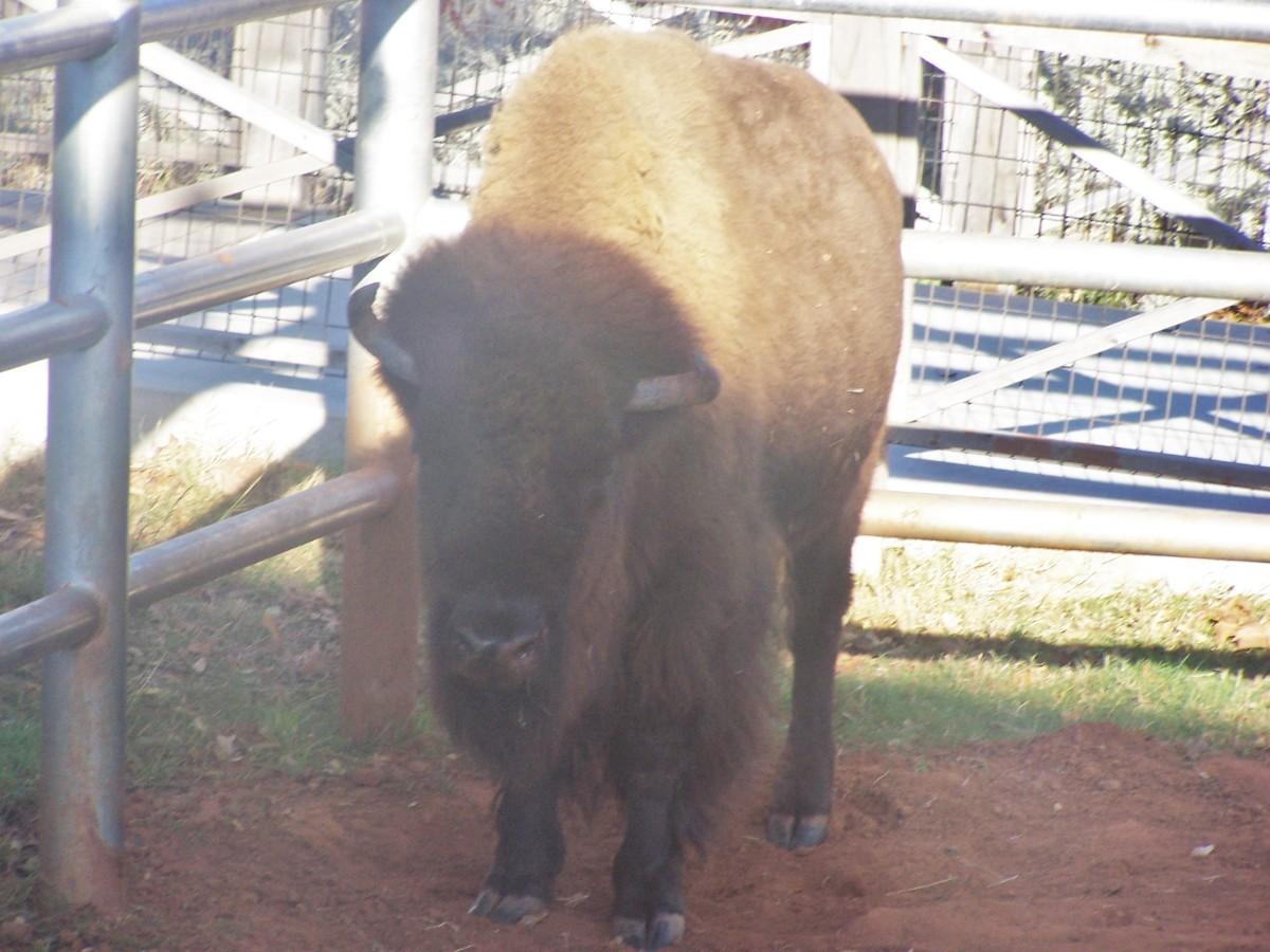 Show me a home where the Buffalo roam, it gets pretty messy...